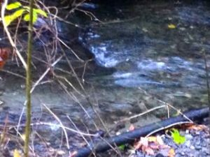 piper's creek
